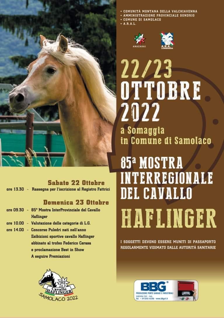 Mostra del cavallo Haflinger
